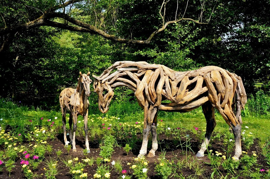 Wooden horse by Lucas Mendonca - Nature Up Close Gardens & Produce
