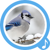 Bird Sounds - Free Ringtones