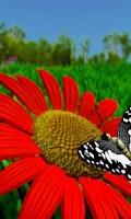 Screenshot of live wallpaper butterfly x