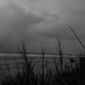Cherry Grove, NC by Jim Weil - Black & White Landscapes