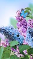 Screenshot of Spring Flowers Live Wallpaper