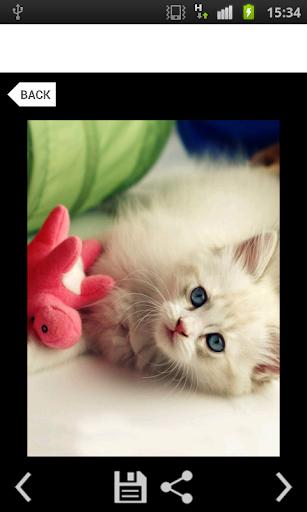【免費娛樂App】Cat Gallery-APP點子