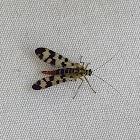 Scorpionfly (female)
