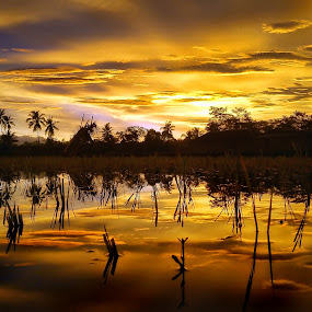 Golden Hour by Randi Pratama M - Instagram & Mobile Android ( field, reflection, indonesia, sunset, golden hour,  )