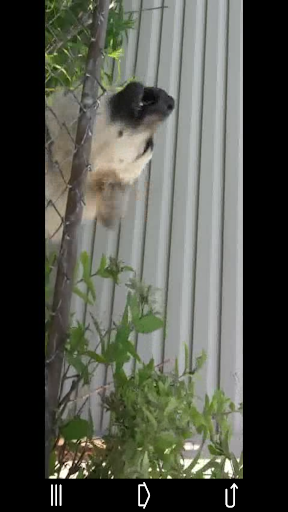 Guard Dog - Theft Alarm