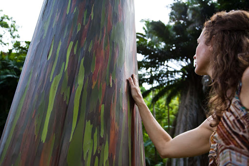 painted-eucalyptus-tree - A woman with a painted eucalptus tree on Hawaii.