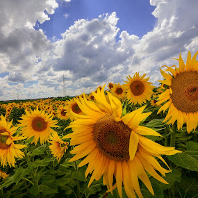Summer time by Nataša Kos - Landscapes Prairies, Meadows & Fields