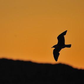 by Trond Svendsen - Animals Birds ( summer, sommer, NRKNordland )