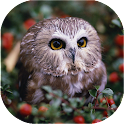 Owls Live Wallpaper icon