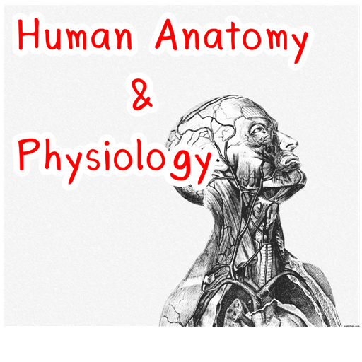Human Anatomy Physiology