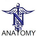 Modern Nursing Anatomy icon