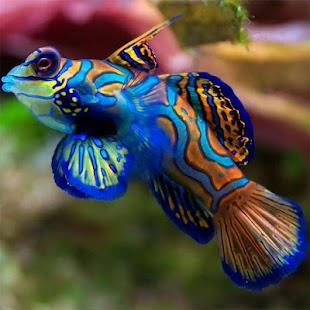 Fish Jigsaw Puzzles - screenshot thumbnail