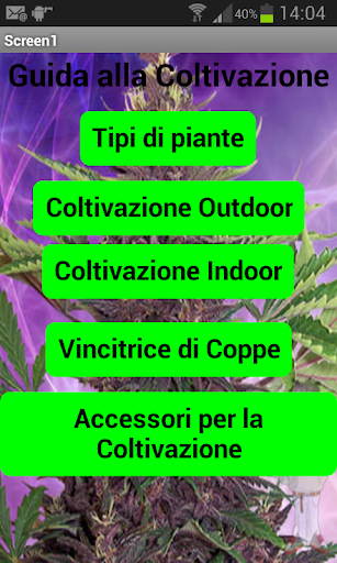 Marijuana 2014 guida