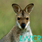 kangaroo live wallpaper icon