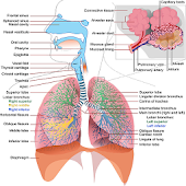 What Causes Mesothelioma