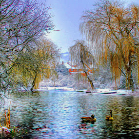 Through my eyes by Catherine Cross - Landscapes Waterscapes ( water, winter, tree, ice, snow, ducks, frost, lake, willow, birds, pond )