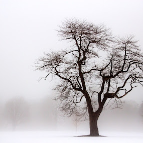 One stands out. by Carolyn Odell - Black & White Landscapes