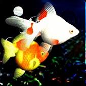 The Night Aquarium
