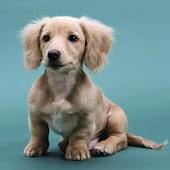 3D cute dog A20