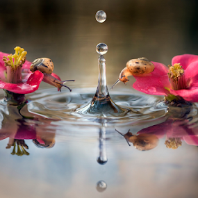 by Alberto Ghizzi Panizza - Nature Up Close Other Natural Objects ( reflection, drop, funny, couple, snail )