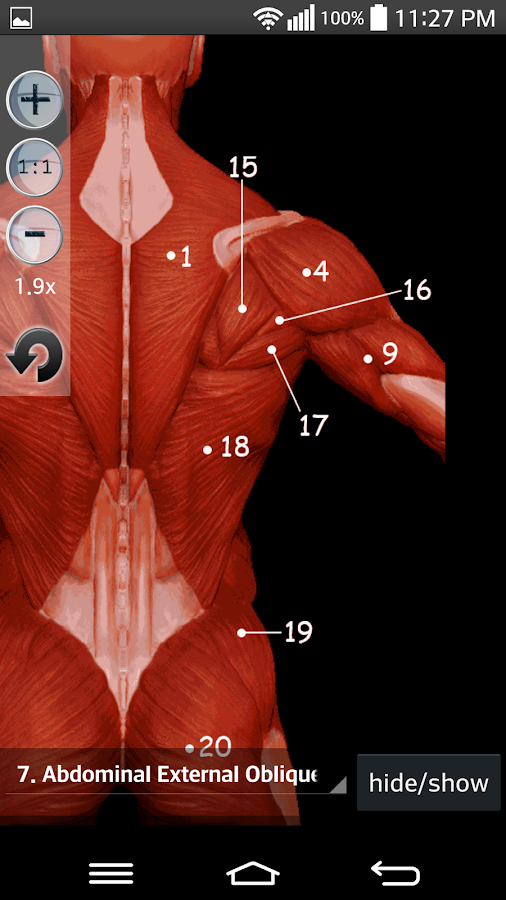 Anatomy Muscles: captura de tela