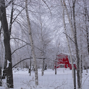 Frosty winter morning by Carol Keskitalo - Buildings & Architecture Other Exteriors ( red, winter, frost, trees, barns )