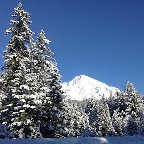 Mt Rainier by LeeAnn Heikkila - Landscapes Mountains & Hills ( snow, winter, cold )