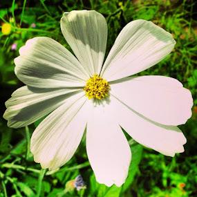 by Samuel Dean - Flowers Single Flower