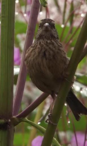 Amusing sparrow