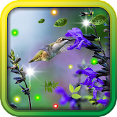 Colibri Love HD live wallpaper