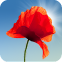 Poppy Field Live Wallpaper