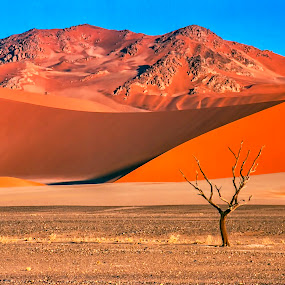 Tree as Focal Point by Johan Jooste Snr - Landscapes Deserts ( sand, dunes, namib desert, desert, tree, namibia )