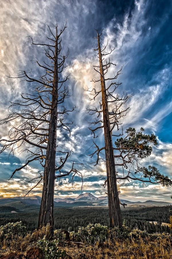 The Sentinels by Becca McKinnon - Landscapes Mountains & Hills ( hat creek, cinder cone, lassen national forest, lassen park, lassen peak, lassen national park )
