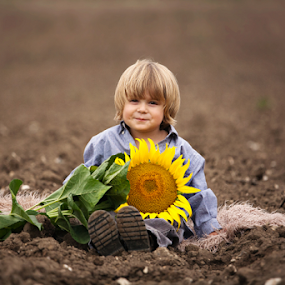 George & his Sunflower by Claire Conybeare - Chinchilla Photography - Babies & Children Toddlers ( countryside, field, england, sweet, mud, nature, outdoors, summer, sunflower, cute, toddler, hitchin )