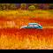 beetle in the field.jpg