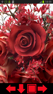 Beautiful Roses HD Wallpapers