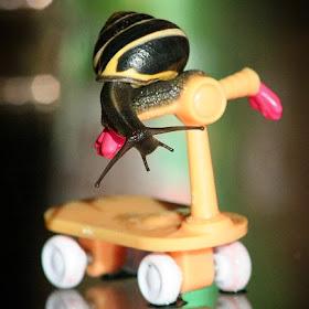 snail_scooter_nosign.jpg