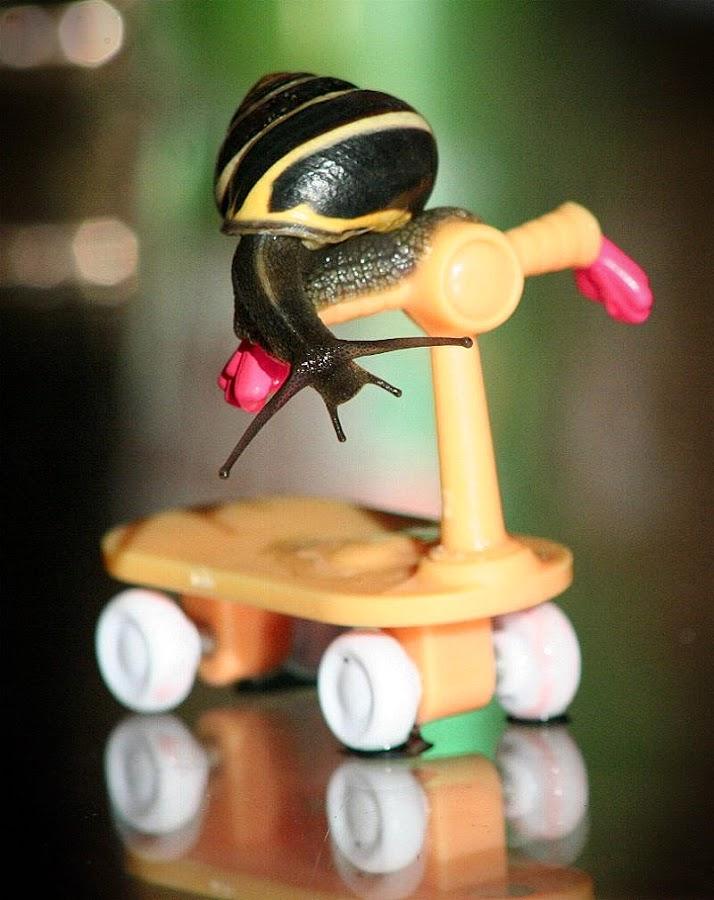 Faster than a Snail's Pace by Lena Arkell - Uncategorized All Uncategorized ( reflection, nature, snail, race, scooter,  )