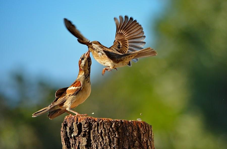 by Nikša Šapro - Animals Birds (  )