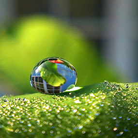 dew by Dhani Prasetya Yudhistira - Instagram & Mobile Other ( dew )