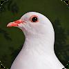 Destiny Dove