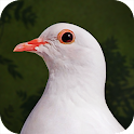 Destiny Dove icon