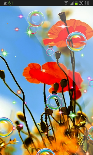 Summer 3D Poppies HD LWP