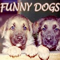 Funny Dogs on Video icon