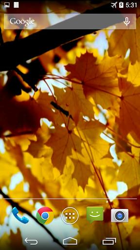 Autumn Video Wallpaper