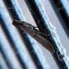 Slender moth