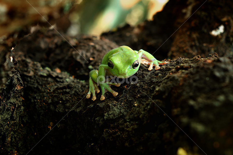 mr.x by A Rahman - Animals Amphibians