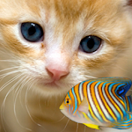 KITTY & FISH LIVE WALLPAPER(8)