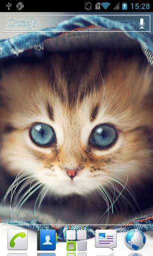 Kittens HD Live Wallpaper