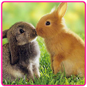Cute Easter Bunny Wallpaper icon